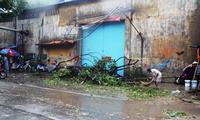 Mưa gió giật mạnh, cây ngã hàng loạt, cuộc sống người Sài Gòn đảo lộn